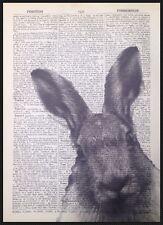 Vintage Grau Hase Druck Antik Wörterbuch Seite Wandkunst Tiere Kaninchen