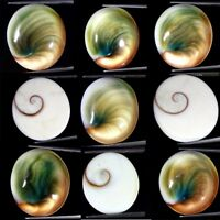 Natural Shiva Eye Oval Cabochon Loose Gemstone Collection