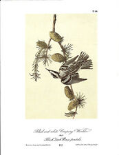 Black-and-White Creeping Warbler Vintage Bird Print by J.J. Audubon ABONA#122