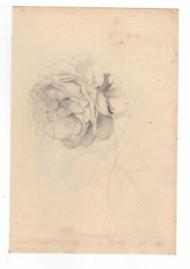 Mary Priscilla Wilson Smith Double Sided Pencil Flower Study August 1869