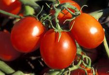 Organic Tomato Vegetable seeds De Barao Red from Ukraine average late