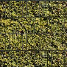 Lebensbaum gelb - Sichtschutzstreifen Doppelstabmattenzaun Sichtschutz PVC Frei