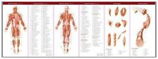 Anatomical Chart Company's Illustrated Pocket Anatomy: Muscular and Skeletal