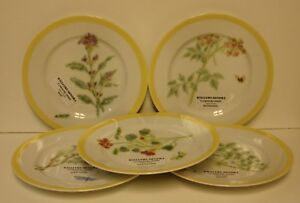 Williams Sonoma FLOWERING HERBS Salad Plate ~~CHOICE SCENE~~More Available
