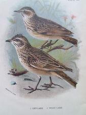 Wood Birds Original Art Prints