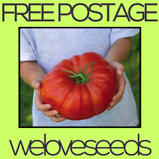 LOCAL AUSSIE STOCK - Giant Heirloom Tomato, Vegetable Seeds ~20x FREE SHIPPING
