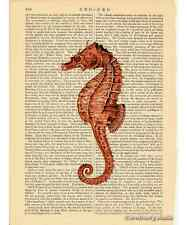 Red Sea Horse Art Print on Antique Book Page Vintage Illutration Seahorse