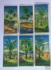 6 Sammelbilder Kaufmannsbilder Gartmann Serie 636 Interessante Bäume