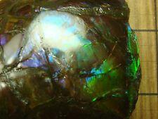 Ammolite Ammonite #21 -  3.95 oz. -  112g. Canada