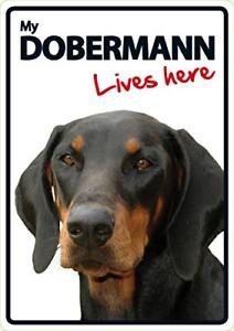 Doberman Lives Here A5 Sign