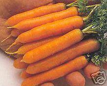 ZANAHORIAS ENANAS delicadeza  150 Semillas-Seeds