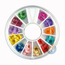 Art Accessories Real Dry Dried Flowers 12 Colors Bundle Set in Wheel Home Decor
