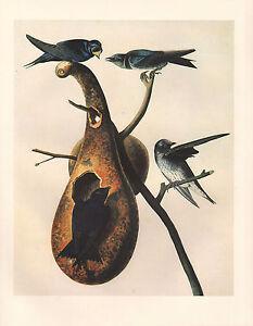 Vintage John James Audubon Vogel Aufdruck ~ Lila Martin