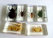 6pc lots Real Insect huge spider beetle crab tortoise  mix  Paperweight YY-003