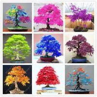 20 pcs/bag Japanese maple seeds Toronto maple leafs bonsai tree seed perennial f