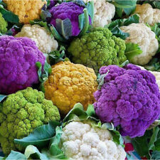 20 pcs Imported mixed Cauliflower (Brassica oleracea) F1 hybrid vegetable seeds