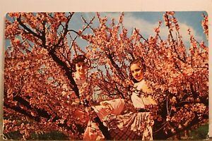 South Carolina SC George Peach Blossom Time Spartanburg Postcard Old Vintage PC