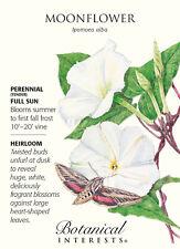 Moonflower Seeds - 5 grams - Ipomoea