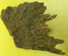 Wild Aceh Oud Agarwood Aquilaria Malaccensis