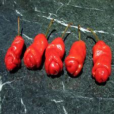 20pcs annuum Organic Peter Pepper Seeds funny Capsicum Yard Garden Free Shipping