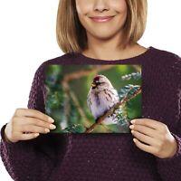 A5 - Redpoll Redcap Bird Birds Nature Print 21x14.8cm 280gsm #24098