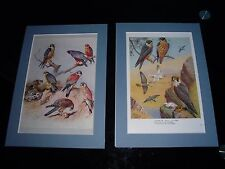 Mounted Prints Bird Of Prey