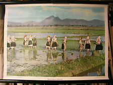 Beautiful Old Wall Picture rice cultivation in Albania work dress 72x52cm Vintage Map