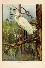 "1926 Vintage TODHUNTER BIRDS ""SNOWY EGRET"" GORGEOUS 90 YEARS OLD Art Lithograph"