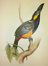 John Gould Native Birds prints exotic painting pecan Vintage Old Australia