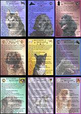 Novelty Dog Signs  Dog Lessons  Various Breeds  Set B