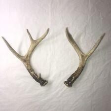 5 Point Deer Antler Shed Matching Set Whitetail
