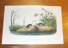 Audubon. Quadrupeds. Octavo. American Marsh Shrew.