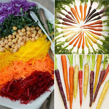 200 Rainbow Carrot Seeds Good Taste Vegetable Easy to grow