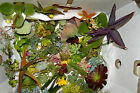 SUCCULENTS 120 very cheap succulent plant cuttings! Ideal for gardens-good mix