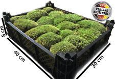 Moos Bodengrund Terrarien Kiste Kugelmoos Terrarium Boden Eidechsen Schlangen