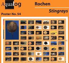 Aqualog Poster Freshwater Stingrays Laminated