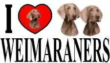 I LOVE WEIMARANERS Car Sticker By Starprint - Featuring the Weimaraner