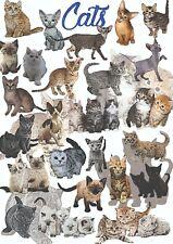 Koty - dekoracyjny plakat A1 + plakat GRATIS + darmowa wysyłka!