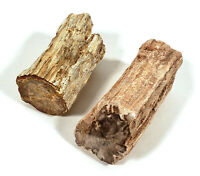2 PIECE LOT PETRIFIED WOOD LIMB CASTS WITH POLISHED ENDS OVER 1 POUND TOTAL