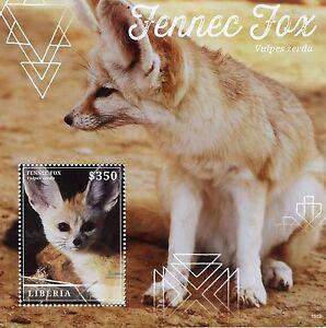 Liberia 2015 MNH Fennec Fox 1v S/S Wild Animals Foxes Vulpes Zerda