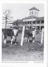 """+PC-Postcard-""""Cattle @ Stock Yards Hotel & Exchange"""" -Ft.Worth Tx.- (A-11)"""