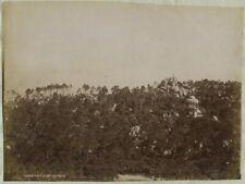 Cintra. Sintra. Parque do Castello. Portugal. Tirage albuminé circa 1880-90. Vin