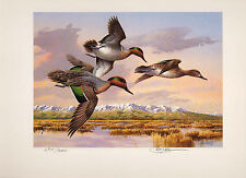 IDAHO #2 1988 STATE DUCK PRINT GREEN WINGED TEAL MEDALLION  GOV ED by Jim Killen