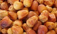 Sukkari Dates Sugary Saudi 16oz/ 1Lb Premium Quality Sukkary Rutub Dates سكري