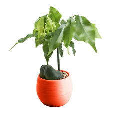Hanging Flower Plant Pot Home Garden Decoration Brick red V3Z9 B6C2 V6K5 D7Y8