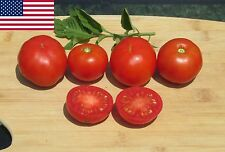Stupice Organic Tomato Seeds- Super Early Heirloom Variety-  40+ 2016 Seeds