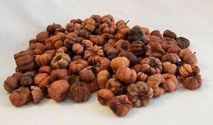 Putka Pods Dried Mini Pumpkin Shapes Bowl Filler 4 cups Unscented Fall Decor