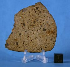 nwa 2923 polymict diogenite meteorite *only one* please see detailed description