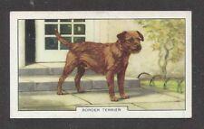 1938 UK Dog Art Full Body Study Gallaher Series B Cigarette Card BORDER TERRIER