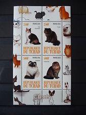 Katzen 01 cats Chats Tiere animals pets Fauna Block KB sheets postfrisch ** MNH